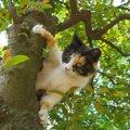 <猫と人の共生の為に 地域猫活動を知ってください> 殺処分ではなく…