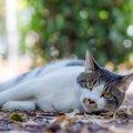5つの暑さ対策で猫の健康を守る