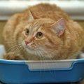大きい猫トイレを使った方が良い猫の特徴と5つのおすすめ商品