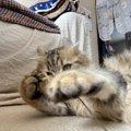 猫が飼い主に猫パンチする理由4つ