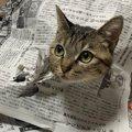 新手の妨害!?猫さんの斬新過ぎる『新聞の遊び方』が話題♡