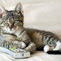 猫が「気まぐれ」といわれる4つの理由
