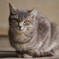猫の冬毛の特徴と役割。アンダーコートが増えてもふもふに!