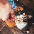 猫が美味しそう!と思う食べ物の特徴