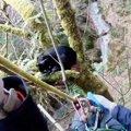 木の上の巣でまどろむ猫!?平和な救助の様子にほっこり♡