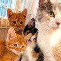 保護困難を極めた母猫は強運だった!子猫たちと幸せな未来へ♡
