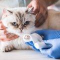 猫が足をひきずる原因や考えられる病気、治療法