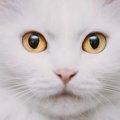 猫のまばたきに隠された4つの意味