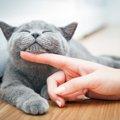 猫の顎にニキビが出来る理由と治療法