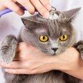 病気になった愛する猫へできる、飼い主の様々な配慮