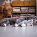 猫用と犬用のオモチャの違い3つ