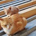 母猫の妊娠から出産と産後までの、気をつけてあげたい行動と注意点
