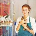 ペットショップで売れ残った猫はどうなる?里親になる方法など