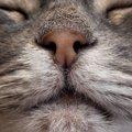猫の鼻息が荒い!原因と考えられる病気