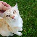 熊本の震災を乗り越えて譲渡された保護猫たち。今の暮らしとは?
