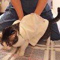 愛猫に作った超簡単ポケットつきタオル!