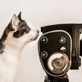 「猫は抱くもの」はどんなお話?あらすじやキャスティング