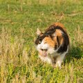 猫が吐きそうにしている5つの原因、病院に連れて行く判断基準