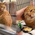 窓の向こうに突然の訪問者…自ら幸せを掴んだ猫に感涙