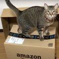 快適な住まいを求めて、猫ちゃんのマイホーム探し!?