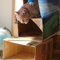 愛猫の為のダンボールキャットタワーを作ってみた!