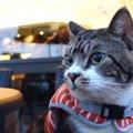 オシャレカフェに参上!猫ちゃんも一緒にインスタ映えを狙う♪