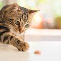 猫が去勢後に変わる6つの事と注意点