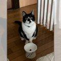 「ご飯まだ?」食べてないですアピール猫さんに9万人がツッコミ