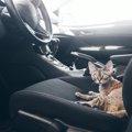 猫に車酔いをさせない乗せ方と酔った時の症状、対処法