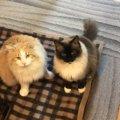 猫が空腹をうったえてくる時の対処法3つ