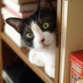 猫がいる本屋Cat's meow books(キャッツミャウブックス)での楽…