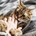 猫がゴロゴロ言いながら噛む3つの心理
