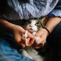 猫の目やにの見分け方と取り方