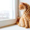 猫の留守番と注意しておく事