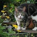 愛猫が行方不明に・・・そんな時に頼れるペット探偵の費用や注意点!