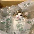 うちにも届かないかしら?『猫届きました』箱入りイケメン猫さん♡