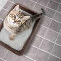 元気なのに猫が血尿をする4つの原因、病院に連れて行くタイミング