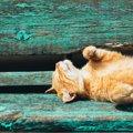 『紫外線対策』が必要な猫の特徴3選