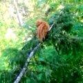 細い枝の上で耐える猫…危険な救出活動の行方は?