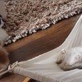 ショック!4ヵ月かけて登れたハンモックに一瞬で乗る子猫に動揺が止…