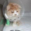 猫の保険ってどんなもの?野良猫は加入できる?