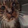 15歳の野良猫…永遠の家族と出会い幸せに♡