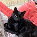 黒猫さんにセカンドハウスの事を聞いてみた!|LAYLAのペットリーディ…
