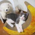 LAYLAの12猫占い【8/3〜8/9】のあなたと猫ちゃんの運勢