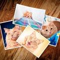 覚えていますか?愛猫の「うちの子記念日」