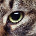 猫風邪で目に起こる3つの症状