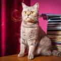 猫の雑誌おすすめ5選
