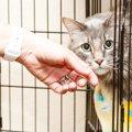 一段の猫ケージの使い方、注意点、おすすめ商品3つ