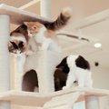 突っ張り型のキャットタワーのおすすめ商品3選