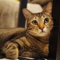 LAYLAの12猫占い【7/20〜7/26】のあなたと猫ちゃんの運勢か